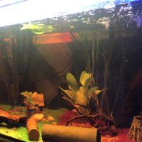 Aquarium samt Fische