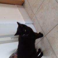 Katzen Pärchen sucht dringend platz
